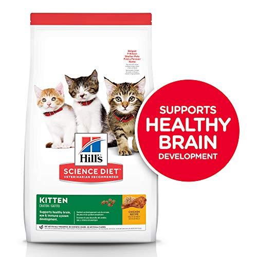 Hill's Science Diet Kitten Food
