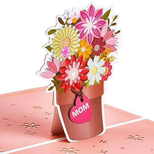 kwiaty prl lidl