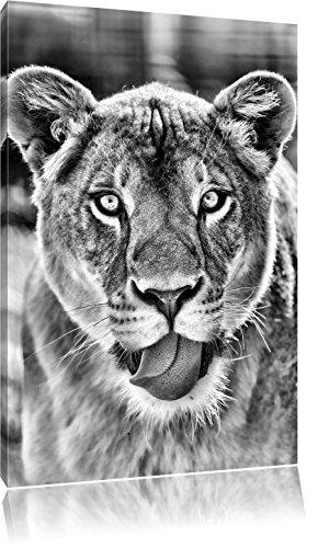 Monocrome, schöne Löwin , Format: 80x60 auf Leinwand, XXL riesige Bilder fertig gerahmt mit Keilrahmen, Kunstdruck auf Wandbild mit Rahmen, günstiger als Gemälde oder...