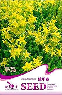 Portal Cool Original Package 50 Sedum Lineare Seeds Stonecrop Yellow Rattle Flowers A201