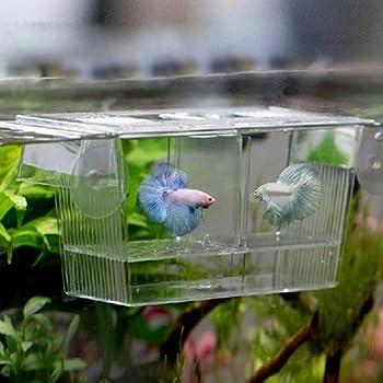 Amazon Com Afco Aquarium Fish Tank Guppy Double Breeding Breeder Rearing Trap Box Hatchery For Sick And Pregnancy Fish Size 12cm X 7cm X 7cm Transparent Pet Supplies