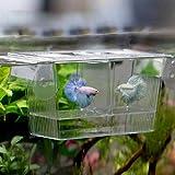quanjucheer Acuario Peces Tanque Guppy Doble Criador Criador Crianza Trampa Caja Criadero para Enfermedad Y Embarazo Peces Tamaño 12cm x 7cm x 7cm (Transparente)