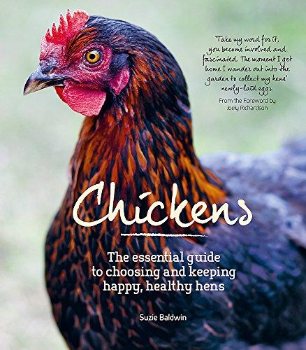 Chickens 🔥
