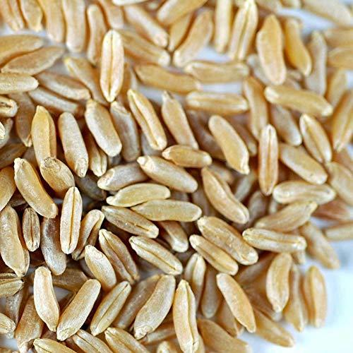 FERRY Bio-Saatgut Nicht nur Pflanzen: 5: Bio KAMUT - Sprießen Grain Seeds - Sprouts, Emergency Food Storage, Schleifen