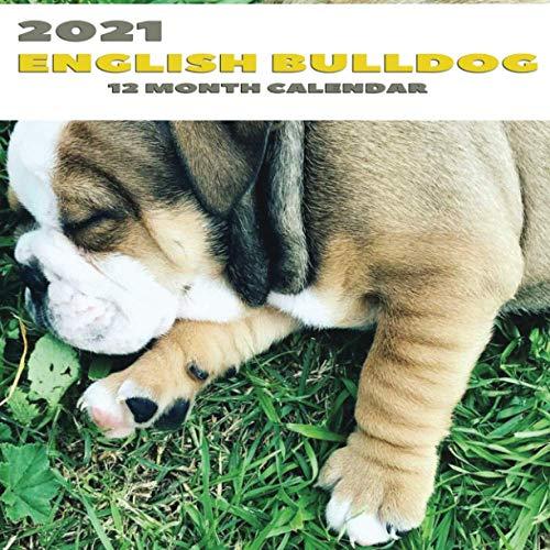 2021 English Bulldog 12 Month Calendar: 2021 Funny English Bulldog 12 Month Calendar Photograph Planner for Cute Puppy & Animal Lovers