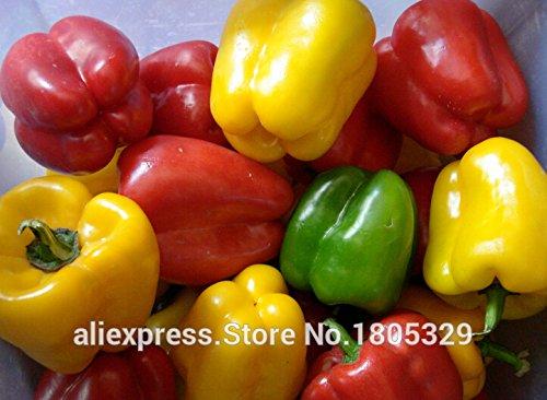 50 graines de poivre géant --Marconi Peppers -DIY SeedsAndPlants Légumes du jardin des plantes
