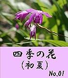 四季の花(初夏)No.01