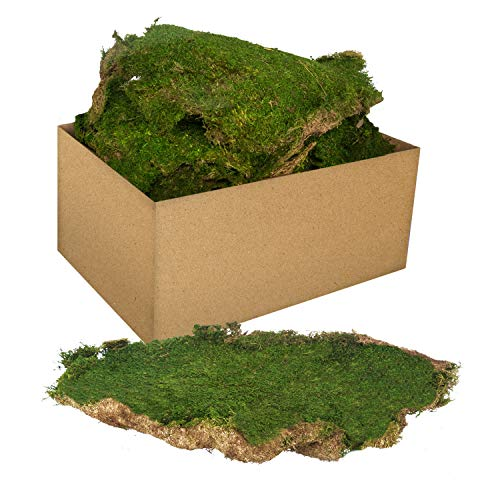 Royal Imports Fresh Dried Forest Green Moss, Naturally Preserved, Flat Sheets, 3 LB Bulk Case