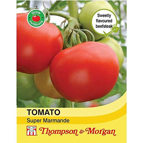 Thompson & Morgan Gemuse Tomate Super Marmande 100 Samen