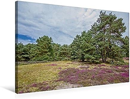 Calvendo Lüneburger Heide, 75x50 cm