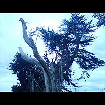 Adaaboas a Dawn After a Breath of a Storm (Free Improv)