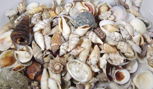 Muscheln NATUR, gemischt. 250 Gramm (12,40 €/KG)