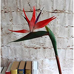 Artificial and Dried Flower 5p Plastic Bird of Paradise Flower Artificial Strelitzia Reginae Flowers Long Stem 70cm Flamingo for Wedding Centerpieces – ( Color: Orange )