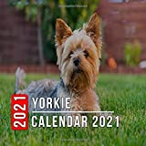 Yorkie Calendar 2021: 12 Month Mini Calendar from Jan 2021 to Dec 2021, Cute Gift Idea | Pictures in Every Month