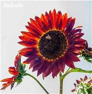 Nuevos 40 PC mezcladas Semillas de girasol Semillas orgánica helianthus annuus semilla de girasol ornamental Flor de la planta rusa para jardín 20