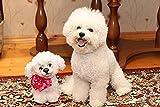 Kit de pintura de diamante para bricolaje Bichon Frise lindo perro punto de cruz, bordado de diamante completo arte de pared decoración del hogar regalo