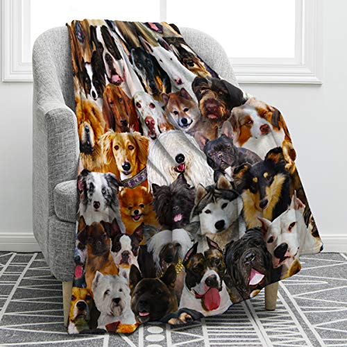 Best Throw Blanket for Dogs