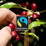 Gourmesso caja Bio & Fairtrade - 100 cápsulas de café compatibles con cafetera Nespresso ®*