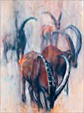 Poster 50 x 70 cm: Grasende Steinböcke von Mark