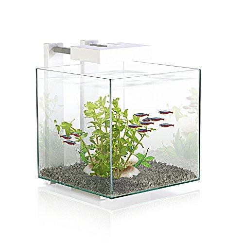 Acquario askoll nexus pure 25x25x31h con filtri e luce a led