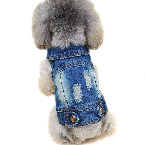 Veste en jean côtelé pour chien, vêtements pour chien, manteau pour chien, manteau pour animal domestique, T-shirt pour le printemps et l'automne, pour chiots, petits chiens, maltais, poodle bichon frise (XL)
