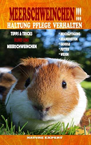 Meerschweinchen Haltung Pflege Verhalten: Meerschweinchen Haltung Buch ob im Gehege, Außengehege oder Unterstand ob Futter, Wasserspender oder Einstreu in dem Buch wird alles erläutert.