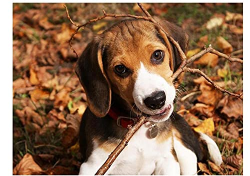 Yqgdss Perro Mordiendo Una Rama Animal 500 Piezas Rompecabezas para Adultos Rompecabezas Educativos para Adultos Actividad Divertida En Interiores