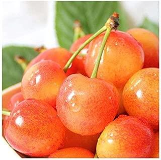 Sweet Cherry Tree Seeds-20 Cherry Seeds Shrub Prunus Cerasus Cherry-Tree Edible Fruit Seeds (Crystal Cherry)
