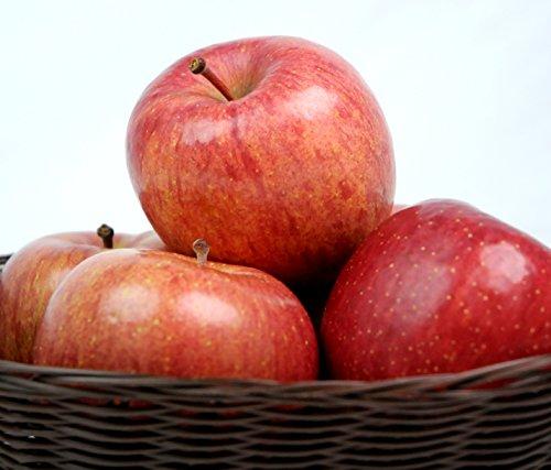 青森県産 りんご 5kg ご家庭用 青森県産りんご 訳あり