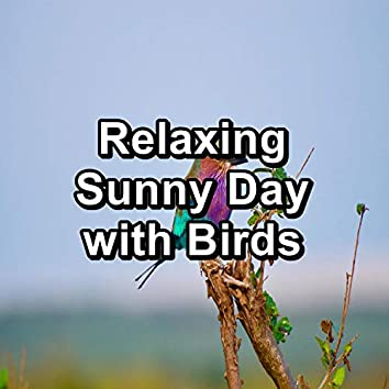 Relaxing Sunny Day with Birds