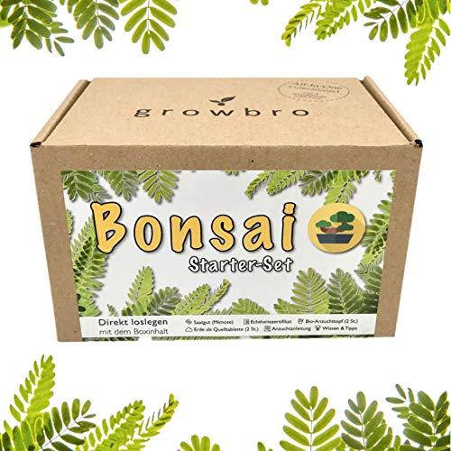 Bonsai Starter Kit, growbro Mimose Anzuchtset, Dein erster Bonsai, Anfänger Geschenk Set, kleines Dankeschön Geschenk für Frauen