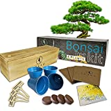 Bonsai Tree Seed Starter Kit - Complete Growing Kit - Grow 4 Bonsai Tree Live Indoor from Seed - Indoor Garden - Grow Your Own Live Plant - Great Gardening Gifts Idea for Fathers