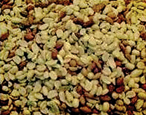 Alpine Ingredients B0049HB3F6 RAW Shelled Peanuts 50 Lb, Multicolor