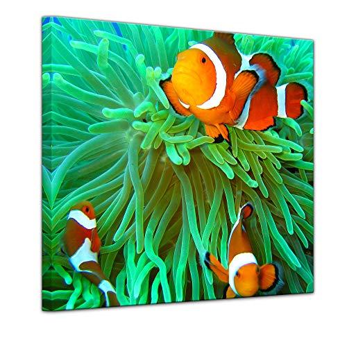 Keilrahmenbild - Clownfisch - Bild auf Leinwand 80 x 80 cm - Leinwandbilder Bilder als Leinwanddruck Tierbild Leben im Meer - Anemonenfisch in der Südsee