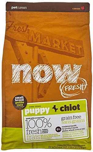 Now Fresh Recette de chiots sans céréales pour petites races - 2,7 kg