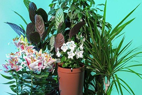 Parrot POT : le pot de fleurs connecté 2