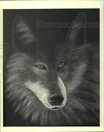 Vintage Photos 1987 Wolf by Artist Julia Healy, Kade Gallery, Wagner College