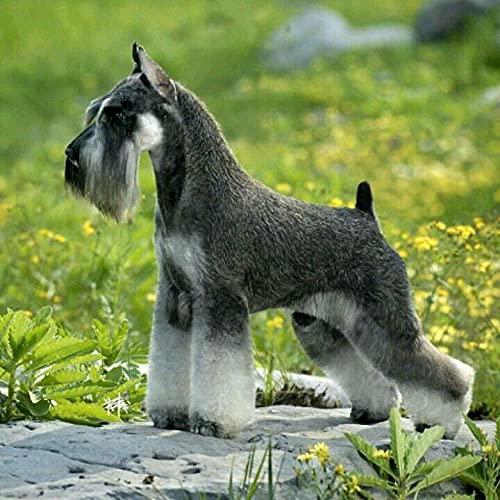 Pintura de diamante para niños Mini Schnauzer Lindo perro mascota Animal Decoración del hogar Bordado Carácter Mosaico Fabricación