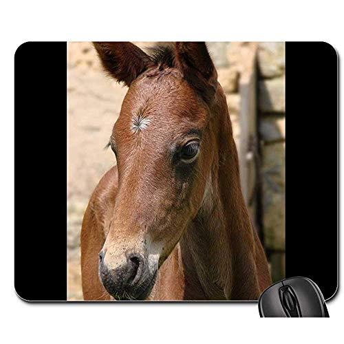 Mousepad dieren veulen paard Franse zadel Portret Vuil muismat muismat muismat muismat muis Mat Gaming Mat 25X30cm