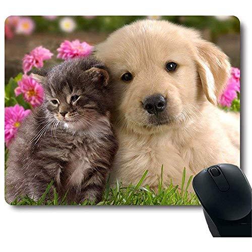 Grijze baby kat gouden hond gouden puppy knuffel dicht bij elkaar mooie muismat