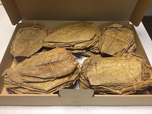 300 stuks (300 gram) 10-15 cm - zeemandelboombladeren Catappa Leaves topkwaliteit - ZEER VERZENDING