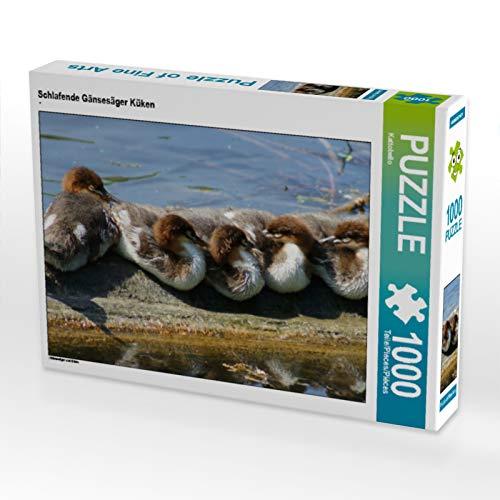 CALVENDO Puzzle Schlafende Gänsesäger Küken 1000 Teile Lege-Größe 64 x 48 cm Foto-Puzzle Bild von Kattobello