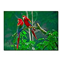 キャンバスに印刷現代の風景キャンバス絵画カラフルな鳥動物オウムの壁アートポスタープリントリビングルーム家の装飾30x50cmフレームなし