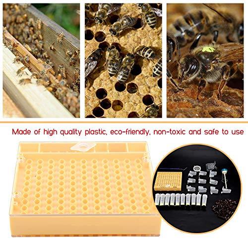 Zerodis 155 Unids Suministros de Apicultura Jaulas Reina, Equipo de Apicultura de Plástico Durable Rearing Cell Cups Bee Cultivating Box Apicultor Herramienta