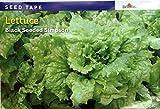Burpee Lettuce Black Seeded Simpson Seed Tape 22.5 Feet 225 Seeds
