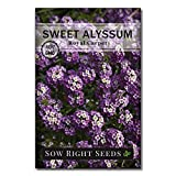 Sow Right Seeds - Sweet Alyssum Flower Seeds for Planting, Beautiful Flowers to Plant in Your Garden; Non-GMO Heirloom Seeds; Wonderful Gardening Gifts (1)