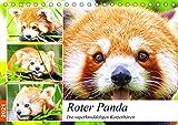 Roter Panda....