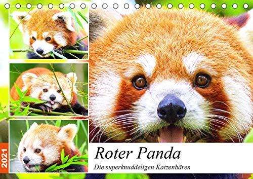 Roter Panda. Die superknuddeligen Katzenbären (Tischkalender 2021 DIN A5 quer)