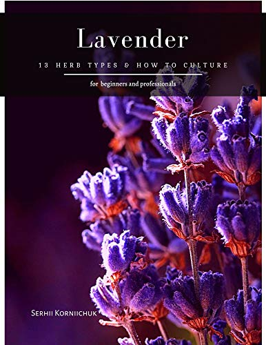 Lavender: 13 herb Types & How to Culture