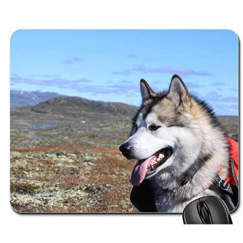 Mausunterlage - Alaskan Malamute kletterte Schlitten-Hund, rutschfeste Spiel-Mausunterlage